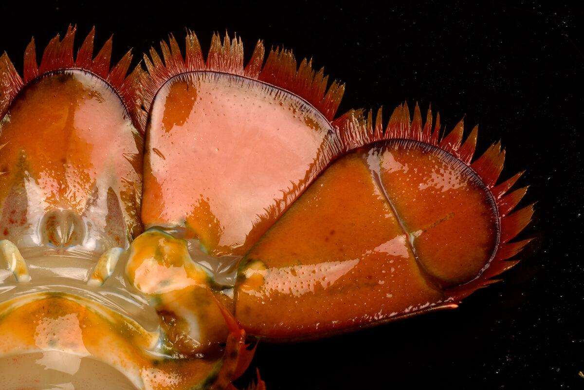 Lobster_Details_2